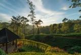 Ceylon Tea Trails (11 of 27)