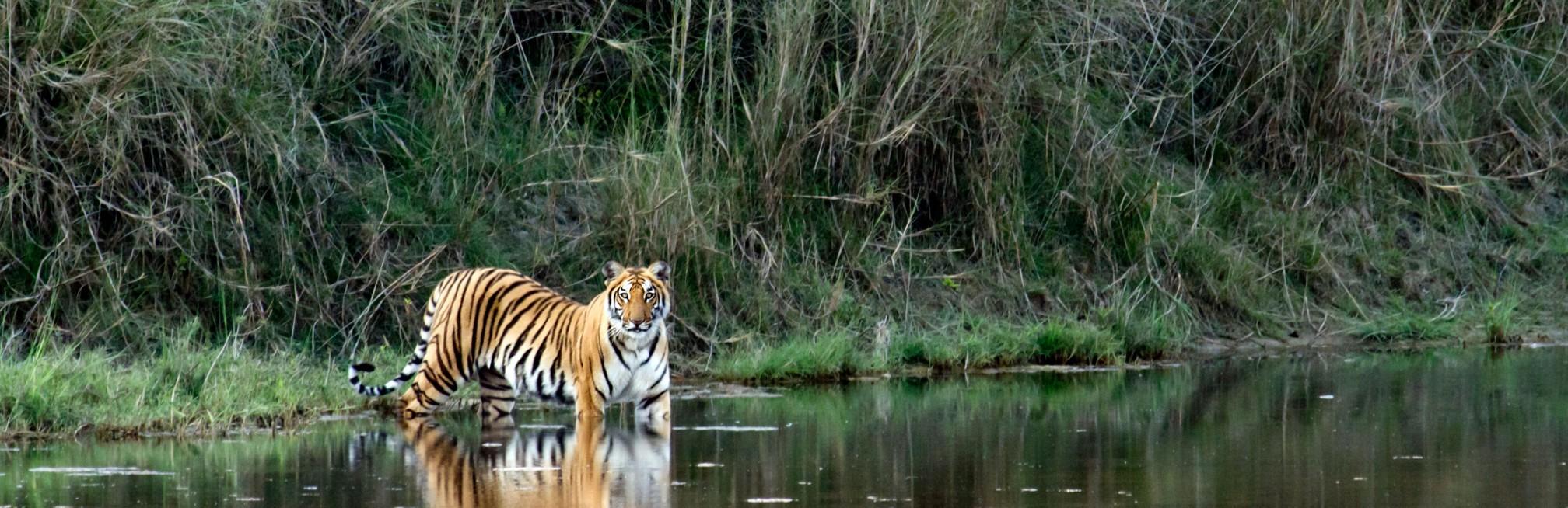 An Indian safari adventure
